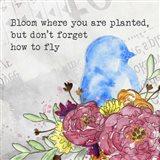 Bloom & Fly II