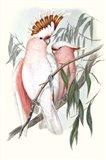 Pastel Parrots I