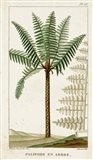 Exotic Palms III