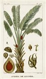 Exotic Palms VI