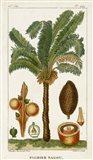 Exotic Palms VII