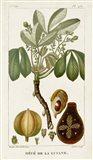 Exotic Palms VIII