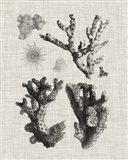 Coral Specimen I