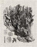 Coral Specimen V