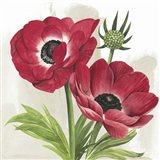 Crimson Anemones I