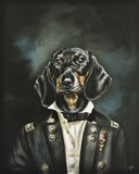 Distinguished Dachshund