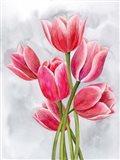 Tulip Tangle I