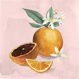 Orange Blossom I