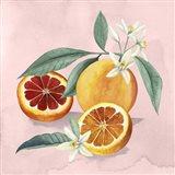 Orange Blossom II