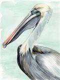 Turquoise Pelican II