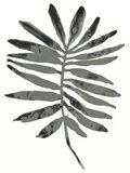 Foliage Fossil VII