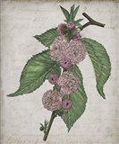 Floral Memory I