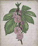 Floral Memory II