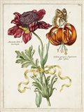 Botanical Bouquet II