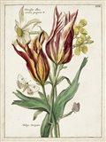 Botanical Bouquet IV