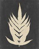 Linen Fern II