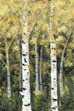 Birch Treeline II