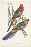 Tropical Parrots II
