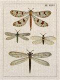 Dragonfly Study I