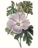 Lavender Beauties I