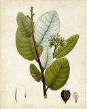 Verdant Foliage I