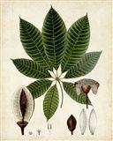Verdant Foliage VII