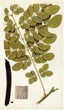 Leaf Varieties I