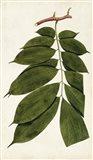Leaf Varieties III