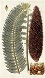 Leaf Varieties IV
