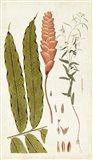 Leaf Varieties VII