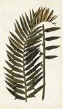 Leaf Varieties VIII