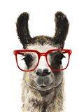 Hip Llama I