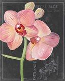 Chalkboard Flower I