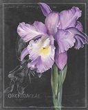 Chalkboard Flower II