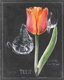Chalkboard Flower III