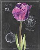 Chalkboard Flower IV