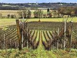 Pastoral Countryside XVI