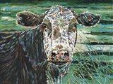 Marshland Cow II