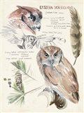 Wildlife Journals I