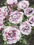 Rose Rhapsody I