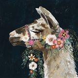 Lovely Llama II