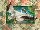Pelican Paradise III