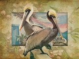 Pelican Paradise IV