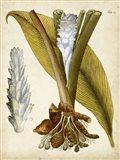 Horticultural Specimen I
