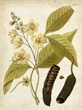 Horticultural Specimen II