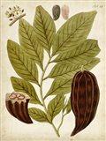 Horticultural Specimen III