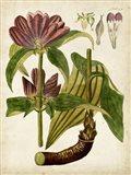 Horticultural Specimen IV