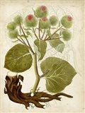 Horticultural Specimen V