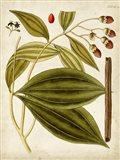 Horticultural Specimen VI