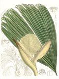 Palm Melange II